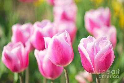 Tulip Time Art Print by Angela Doelling AD DESIGN Photo and PhotoArt