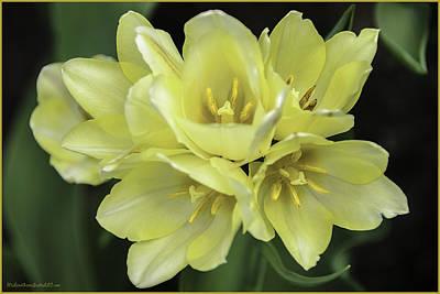 Photograph - Tulip Time Bouquet by LeeAnn McLaneGoetz McLaneGoetzStudioLLCcom