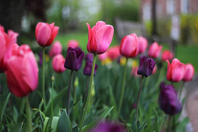 Photograph - Tulip Time by Jessica Jenney