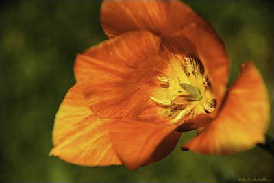 Photograph - Tulip Time Orange Vision by LeeAnn McLaneGoetz McLaneGoetzStudioLLCcom