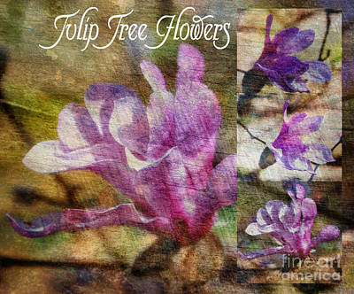 Whiteoaks Photograph - Tulip Tree Flower Collage by Eva Thomas