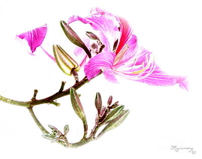 Digital Art - Tulip Tree Flowers by Mariarosa Rockefeller