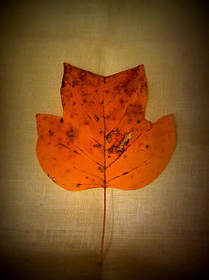 Photograph - Tulip Tree Leaf by Patricia Januszkiewicz