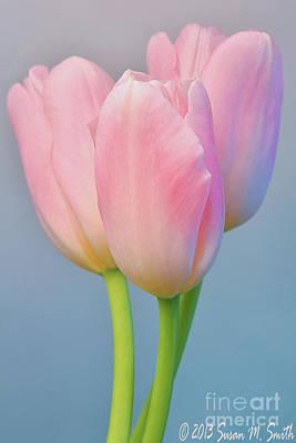 Interior Design Photograph - Tulip Trio I by Susan Smith