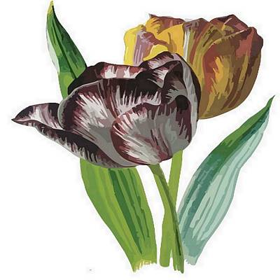 Digital Art - Tulip Vector On White Background by Tracey Harrington-Simpson