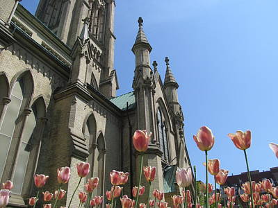 Tulip With The Church Art Print by Alfred Ng