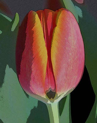 Tulip1 Art Print by Valerie Timmons