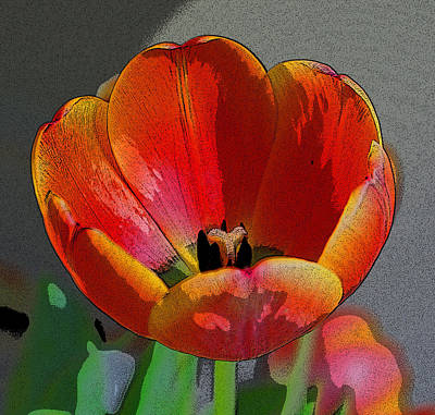 Tulip2 Art Print by Valerie Timmons