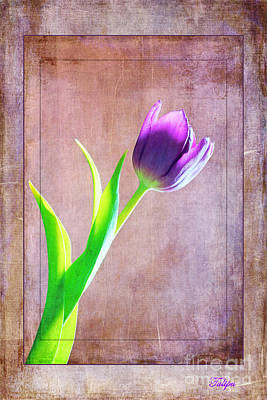 Photograph - Tulipa by David Birchall