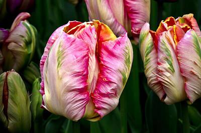 Tulips 02 Art Print