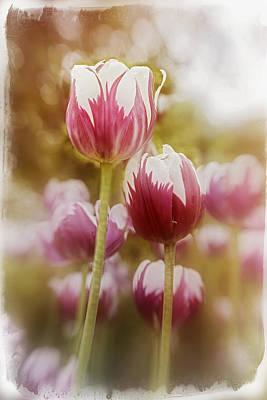 Animal Watercolors Juan Bosco - Tulips 2 by Diane Dugas
