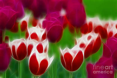 Tulips-6848-fractal Print by Gary Gingrich Galleries