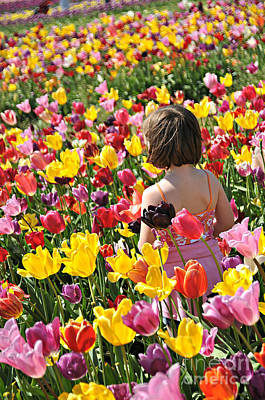 Photograph - Tulips A Moment Remembered  by Mindy Bench
