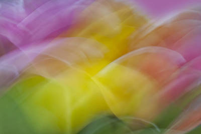 Tulips Abstract Art Print by Susan Candelario