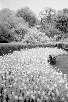Photograph - Tulips And Bench II by Dave Beckerman