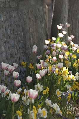 Photograph - Tulips And Daffodils by Jackie Farnsworth