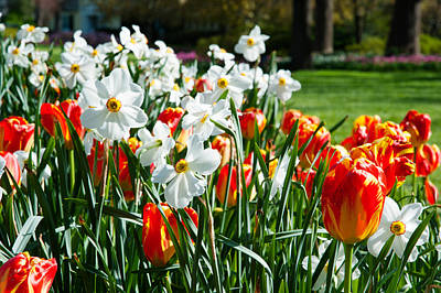 Baltimore Photograph - Tulips And Other Flowers At Sherwood by Panoramic Images