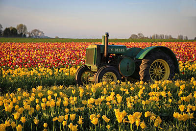 Photograph - Tulips And Tractors by Steve McKinzie