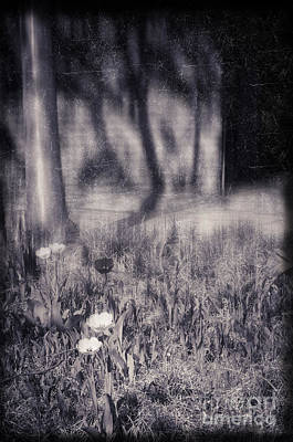 Photograph - Tulips And Tree Shadow by Silvia Ganora