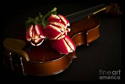 Tulips And Violin Art Print by Edward Fielding