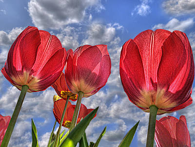 Photograph - Tulips Are Better Than One by Paul Wear