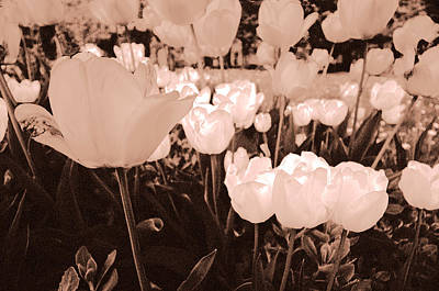 Photograph - Tulips by Arkady Kunysz