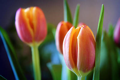 Photograph - Tulips Artistry by Milena Ilieva