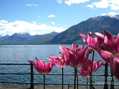 Switzerland Photograph - Tulips At Lake Geneva by Amanda Mohler