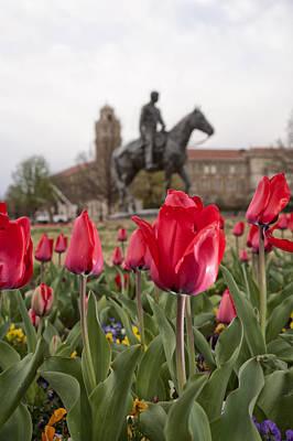 Photograph - Tulips At Texas Tech University by Melany Sarafis