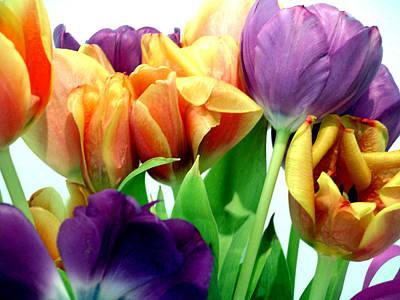 Tulips Bouquet Art Print by Karen Nicholson