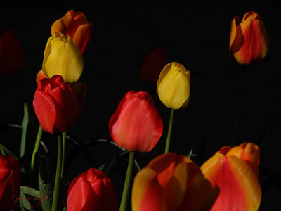 Photograph - Tulips Contrast by George Tuffy