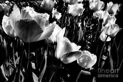 Tulips Art Print by Dariusz Gudowicz