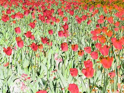 Photograph - Tulips - Field With Love - Photopower 1969 by Pamela Critchlow