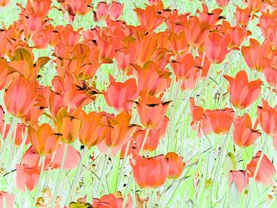 Photograph - Tulips - Field With Love - Photopower 1973 by Pamela Critchlow