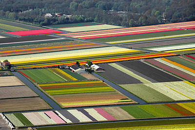 Photograph - Tulips Fields, Lisse by Bram van de Biezen