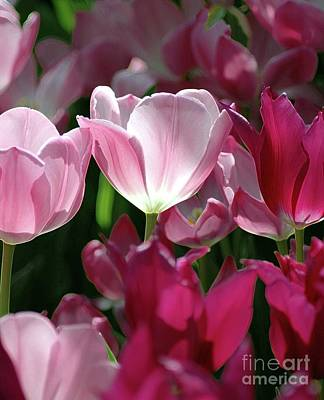 Kathleen Photograph - Tulips For Spring by Kathleen Struckle