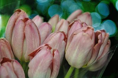 Photograph - Tulips For You by Jan Amiss Photography