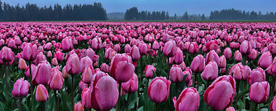 Photograph - Tulips Galore by Don Schwartz