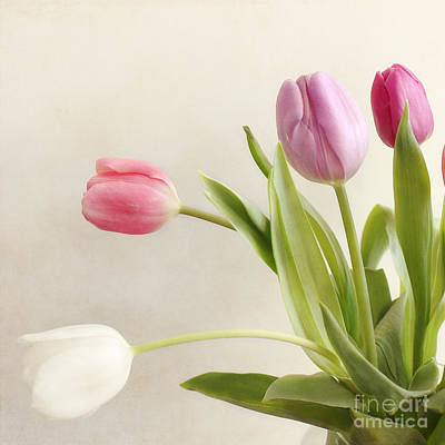 Tulips Print by LHJB Photography