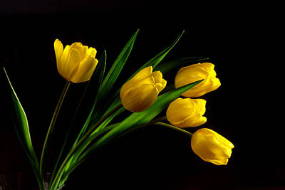 Photograph - Tulips I by Michael Moschogianis