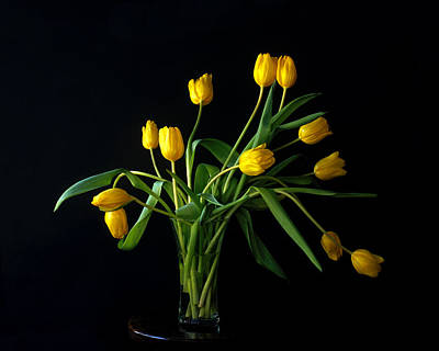 Photograph - Tulips II by Michael Moschogianis