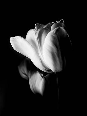 Photograph - Tulips In Black And White by Julie Palencia