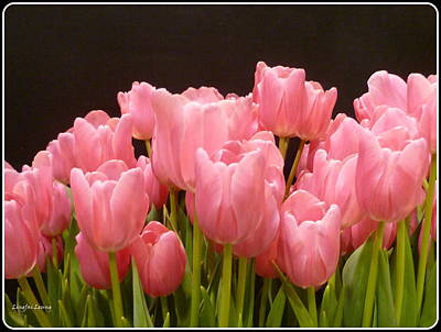 Art Print featuring the photograph Tulips In Bloom by Lingfai Leung