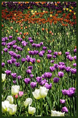 Photograph - Tulips In Holland by LeeAnn McLaneGoetz McLaneGoetzStudioLLCcom