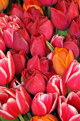 Tulips In Pike Place Market Art Print