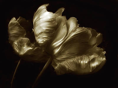 Duotone Photograph - Tulips In Sepia by Jessica Jenney
