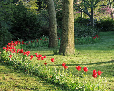 Art Print featuring the photograph Tulips In The Park by Jose Oquendo