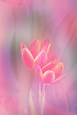 Tulips In The Pink Art Print by Mary Timman