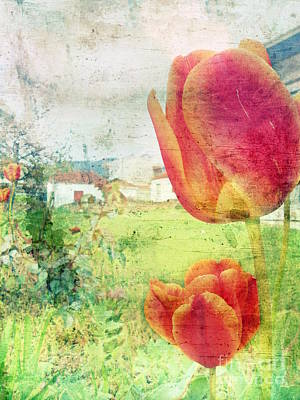 Photograph - Tulips In The Village by Ioanna Papanikolaou