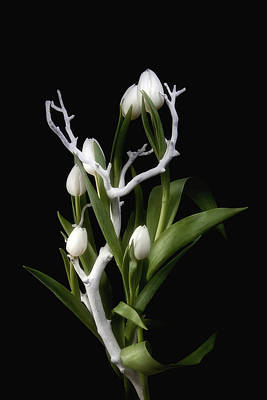 Stem Photograph - Tulips In Tree Branch Still Life by Tom Mc Nemar